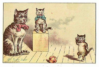 1889 Cats Playing & Dancing Vict Trade Card Jos Stiner - Coffee Tea Sugar Spices