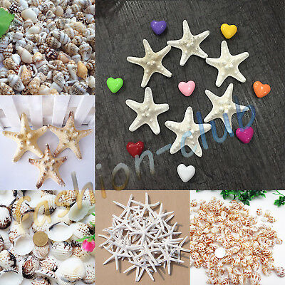 Lot Natural Sea Star Starfish Conch Shell Hawaii Miniature Craft Fish Tank Décor