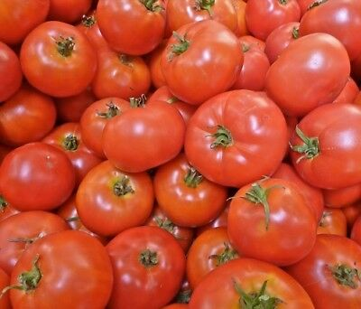 Tomato, Ace Fifty Five seeds - Heirloom & Non GMO