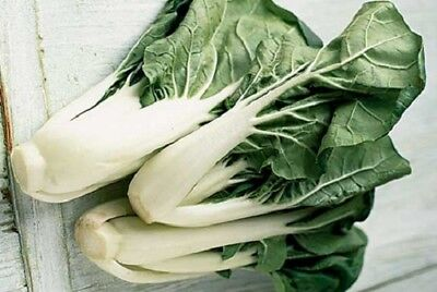 Cabbage, Chinese, Pak Choi seeds - Heirloom & Non GMO