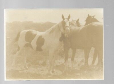 5x7  VINTAGE HORSE PHOTO #7 BLACK AND WHITE B/W UNKNOWN HORSES PHOTO #7