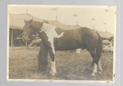 5x7  VINTAGE HORSE PHOTO #16 BLACK AND WHITE B/W UNKNOWN HORSES PHOTO #16