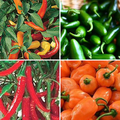 4 pack Chilli pepper seeds - Jalapeno, Hungarian Hot Wax, Habanero, Ring o fire