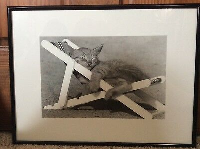 Framed Photo of Small Kitten in a Lounge Chair