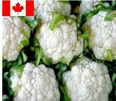 Cauliflower Seed : SNOWBALL Y IMPROVED 300+ Seeds Heirloom Non GMO Vegetable