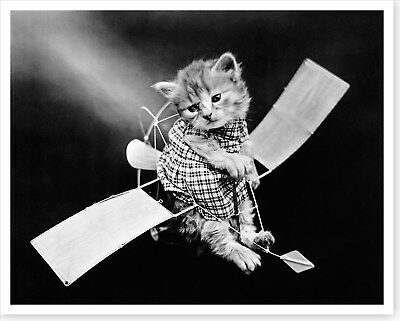 1914 Wash Day Cat Hanging Laundry Harry Whittier Frees Silver Halide Photo