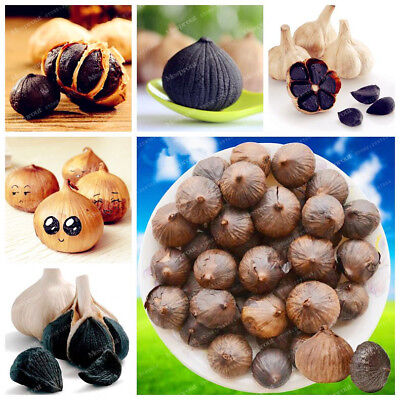 100Pcs Rare Healthy Black Garlic Seeds Pure Natural And Organic Vegetable Seeds