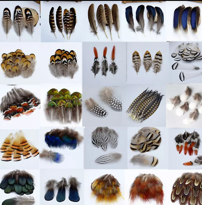 40 Types Feathers Peacock Rooster Goose Guinea Duck Pheasant DIY Craft Wedding