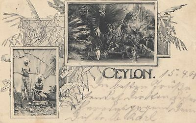 Ceylon: 1901: picture post card to Ulm