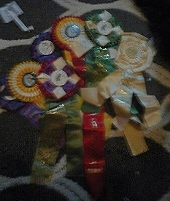 Seven Horse Show Ribbons - New England - 1970's - Early 80's - FREE SHIP