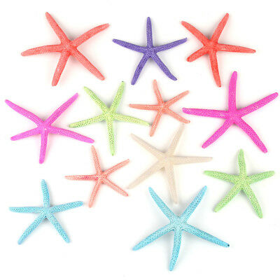 "12pcs  2"" To 4"" Assorted Finger Starfish Sea Shell Wedding Home Beach Decor Craf"