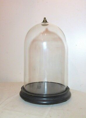 antique ebonized footed wood glass dome brass display cloche bell jar case