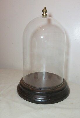 antique carved routed wood glass dome brass display cloche bell jar case .