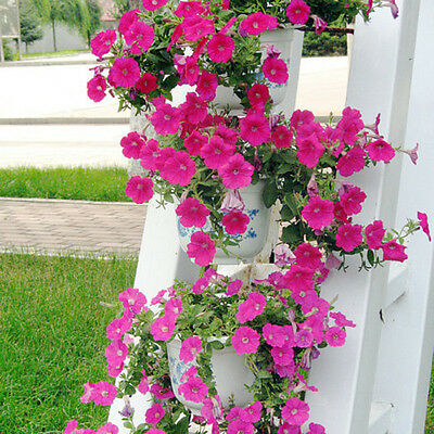 100Pc Trailing Petunia Flower Seeds Hanging Petunia Hybrida Flowers Garden W8T8