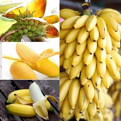 100x Fresh Musa Acuminata Edible Dwarf Banana Tree Plant Seeds Tropical fruits^