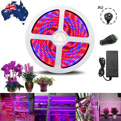 1-5M 5050 LED Full Spectrum Grow Light Strip Lamp Waterproof Red+Blue AU Plug