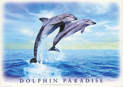 Poster: Animals:   Dolphin Paradise  - Free Shipping    #pe1139   Rc20 G