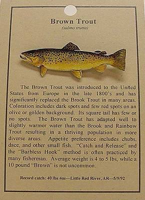 Brown Trout  Fish Hat Pin Lapel Pins Free Shipping