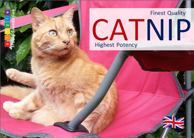 BEST catnip, max potency for powerful effect! 14g