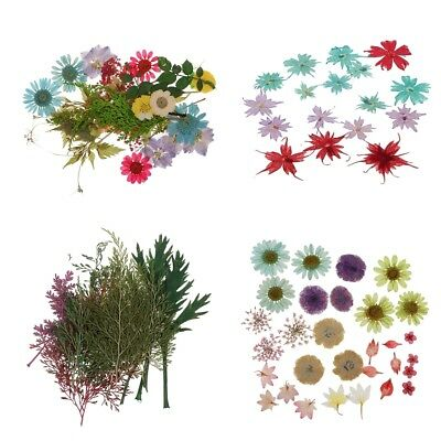60x Real Pressed Press Dried Flower Filler For Resin Pendant Jewelry Crafts