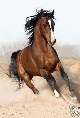 LMOP87 high quality hand-painted MODERN horse OIL PAINTING on CANVAS wall ART