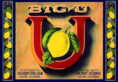 Upland Big-U Lemon Citrus Fruit Crate Label Art Print