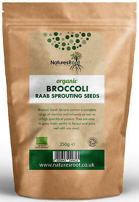 Organic Broccoli Sprouting Seeds - Superfood | Non GMO | Microgreen Sprouts