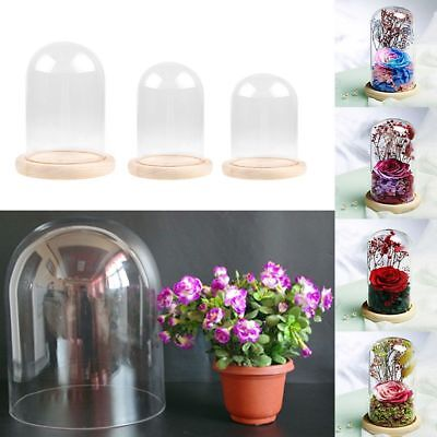 Glass Dome Jar Bell Decorative Display Wood Base Vintage For Artificial Plant UK