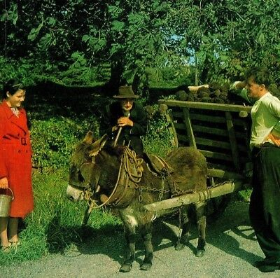 Bringing Home the Turf with Donkey and Cart Ireland Vintage Postcard