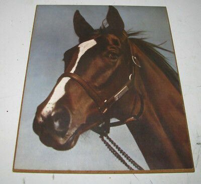 Vintage Wooden Decorative Wall Hanging Horse Print