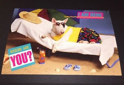 Vintage 80s Spuds MacKenzie Dog at Beach Postcard I am Here, Where Are You?