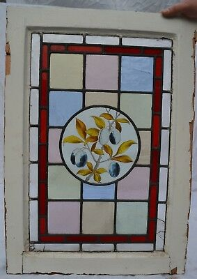 Victorian English handpainted stained glass window panel. R751f. PLUMS