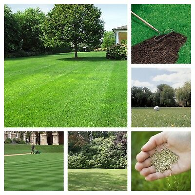 Grass Seed Lawn Patch Repair. Fine lawn, Hard Wearing & Shady Area Mix.