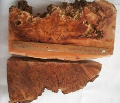 2 Large Tasmanian Thick Myrtle Burl Slabs Craft Wood Woodworking Dry Timber Lot3