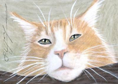 ACEO original pastel drawing ginger maine coon cat by Anna Hoff