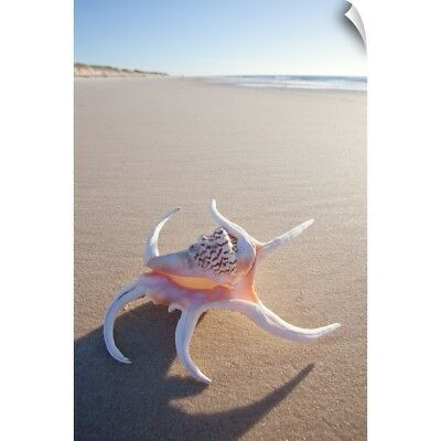 Wall Decal entitled Shell on a beach in Australia