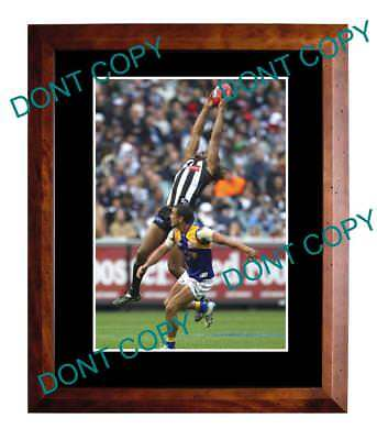 Harry O'brien Collingwood Fc Star Large A3 Mark Photo