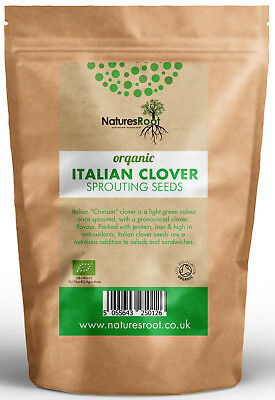 Organic Crimson Clover Sprouting Seeds - Superfood | Italian Microgreen Sprouts