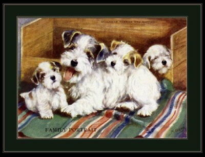 94779 English Picture Sealyham Terrier Dog Puppies Decor WALL PRINT POSTER UK
