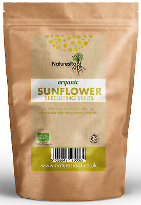 Organic Sunflower Sprouting Seeds - Superfood | BEST TASTING Microgreen Sprouts