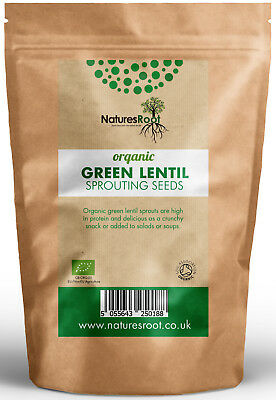 Organic Green Lentil Sprouting Seeds - Microgreen Sprouts Vegetable Legume