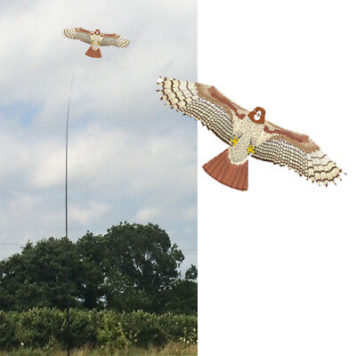 Hawk Kite kits. Pattern Bird Scarer Protect Farmers Crops. With A Free Line