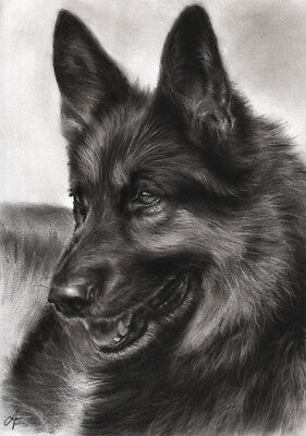 Original charcoal drawing German Shepherd Schaeferhund Art by Angela Franke
