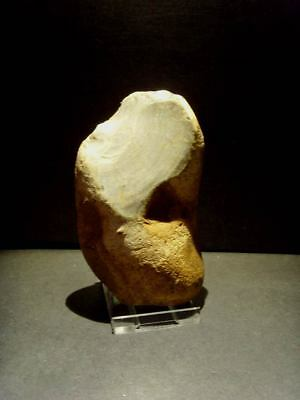 Lower Palaeolithic - Exceptional Acheulean pebble chopper- Rare UK C.500,000+ BP