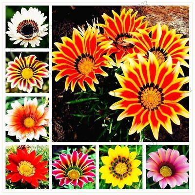 100pcs/bag Gazania rigens Flower seeds For home garden bonsai plant for indoor o