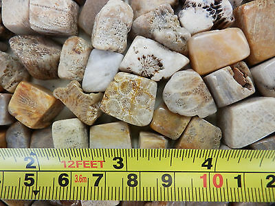 Tumbled Fossil Stone Honeycomb Coral 2.1 to 9.4 g small pieces 0.2 Kilo KG Lot