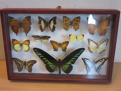 """Lot of 12 taxidermy Butterfly collection Rares """"Jungle Jewels"""" Framed"""