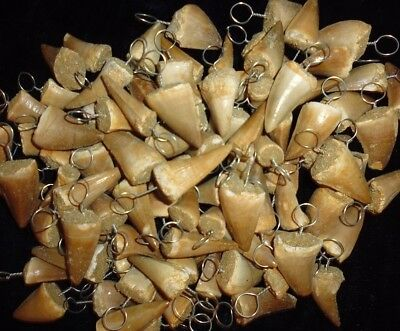 10 wired Mosasaur fossil teeth Necklace, pendants fossilized Dinosaur teeth