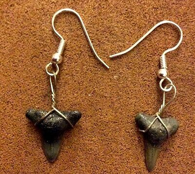 Shark Teeth Earrings The Real Thing For You!