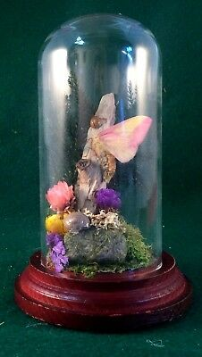 X19D  Antique Victorian Style Taxidermy Entomology Rosy Maple Moth glass Dome